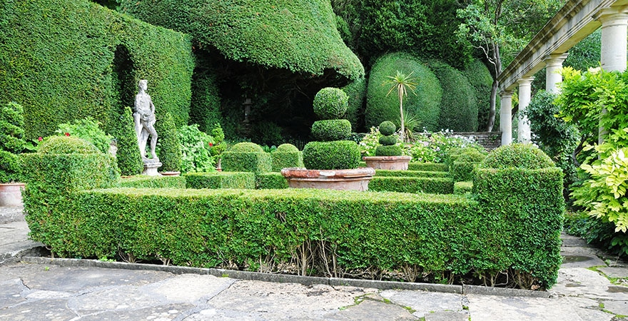 Landscaping Shrubs For Every Garden New Worlds Project